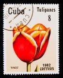 Tulip `Ringo`, Tulips serie, circa 1982 Royalty Free Stock Image