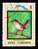 Zapata Wren Ferminia cerverai, Endemic birds, circa 1983. MOSCOW, RUSSIA - AUGUST 29, 2017: A stamp printed in Cuba shows Zapata Wren Ferminia cerverai, Endemic royalty free stock photos