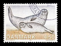 Common Seal (Phoca vitulina), Fauna serie, circa 2005. MOSCOW, RUSSIA - AUGUST 18, 2018: A stamp printed in Denmark shows Common Seal (Phoca vitulina), Fauna stock photo