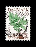 Potato plant, Europa (C.E.P.T.) 1992 - Discovery of America - 500th.Anniversary serie, circa 1992. MOSCOW, RUSSIA - AUGUST 18, 2018: A stamp printed in Denmark stock photos