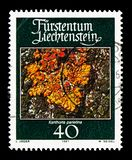 Lichen Xanthoria parietina, Mosses and Lichens serie, circa 1981. MOSCOW, RUSSIA - AUGUST 18, 2018: A stamp printed in Liechtenstein shows Lichen Xanthoria royalty free stock images