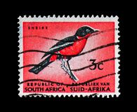 Crimson-breasted Shrike (Laniarius atrococcineus), Definitive Issue - Decimal Issue serie, circa 1964. MOSCOW, RUSSIA - AUGUST 18, 2018: A stamp printed in South royalty free stock photo