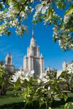 MOSCOW, RUSSIA - Close up view of the main building of Moscow State University, framed by white flowers of apple.  stock photo