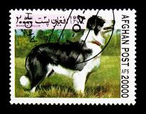 Border Collie (Canis lupus familiaris), Dogs serie, circa 1999. MOSCOW, RUSSIA - DECEMBER 21, 2017: A stamp printed in Afghanistan shows Border Collie (Canis stock photography
