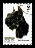 Giant Schnauzer (Canis lupus familiaris), Dogs serie, circa 2003. MOSCOW, RUSSIA - DECEMBER 21, 2017: A stamp printed in Afghanistan shows Giant Schnauzer (Canis Stock Photo
