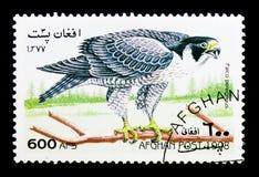 Peregrine Falcon (Falco peregrinus), Birds serie, circa 1998. MOSCOW, RUSSIA - DECEMBER 21, 2017: A stamp printed in Afghanistan shows Peregrine Falcon (Falco Stock Photos