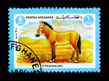 Przewalski\'s Horse (Equus ferus przewalskii), Animals serie, cir. MOSCOW, RUSSIA - DECEMBER 21, 2017: A stamp printed in Afghanistan shows Przewalski\'s Horse ( Stock Image