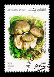 Soap-scented toadstool (Tricholoma saponaceum), Mushrooms serie,. MOSCOW, RUSSIA - DECEMBER 21, 2017: A stamp printed in Afghanistan shows Soap-scented toadstool Stock Photography