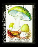 Death cap Amanita phalloides, Fungi serie, circa 1990. MOSCOW, RUSSIA - DECEMBER 21, 2017: A stamp printed in Bulgaria shows Death cap Amanita phalloides, Fungi Royalty Free Stock Photo
