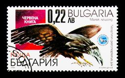 Egyptian Vulture Neophron percnopterus, Birds serie, circa 200. MOSCOW, RUSSIA - DECEMBER 21, 2017: A stamp printed in Bulgaria shows Egyptian Vulture Neophron Royalty Free Stock Image