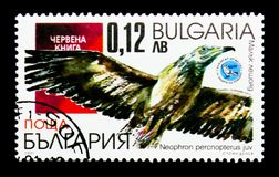Egyptian Vulture Neophron percnopterus, Birds serie, circa 200. MOSCOW, RUSSIA - DECEMBER 21, 2017: A stamp printed in Bulgaria shows Egyptian Vulture Neophron Royalty Free Stock Photos