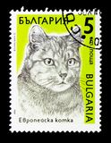 European Domestic Cat Felis silvestris catus, Cats serie, circa 1989. MOSCOW, RUSSIA - DECEMBER 21, 2017: A stamp printed in Bulgaria shows European Domestic Cat Royalty Free Stock Images