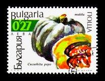 Pumpkin Cucurbita pepo, Cucurbits serie, circa 2002. MOSCOW, RUSSIA - DECEMBER 21, 2017: A stamp printed in Bulgaria shows Pumpkin Cucurbita pepo, Cucurbits Stock Image