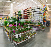 MOSCOW, RUSSIA - FEBRUARY 15, 2015: Potted plants in the store Leroy Merlin. Leroy Merlin Stock Image