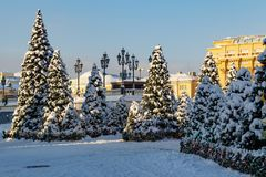 Moscow, Russia - February 01, 2018: Snow-covered christmas trees on Manezhnaya square. Winter in Moscow Royalty Free Stock Image