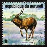 Nyala (Tragelaphus angasii), also called the indian antelope, se Stock Photos