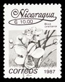 Bixa orellana, Local Flowers serie, circa 1987. MOSCOW, RUSSIA - FEBRUARY 22, 2019: A stamp printed in Nicaragua shows Bixa orellana, Local Flowers serie, circa royalty free stock images