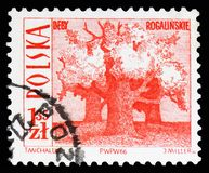 Old oaks, Rogalin, Tourist Attractions serie, circa 1966. MOSCOW, RUSSIA - FEBRUARY 10, 2019: A stamp printed in Poland shows Old oaks, Rogalin, Tourist royalty free stock photos