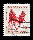 Erythrina, Definitive Issue - Decimal Issueserie, circa 1968. MOSCOW, RUSSIA - FEBRUARY 10, 2019: A stamp printed in South Africa shows Erythrina, Definitive stock photography