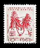 Erythrina, Definitive Issue - Decimal Issueserie, circa 1968. MOSCOW, RUSSIA - FEBRUARY 10, 2019: A stamp printed in South Africa shows Erythrina, Definitive stock photos