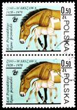 Przewalski's Horse (Equus przewalskii), Warsaw Zoological Gardens serie, circa 1978. MOSCOW, RUSSIA - FEBRUARY 10, 2019: Two postage stamps printed in royalty free stock photos