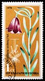 Fritillaria stribrnyi Vel, Rare Flowers serie, circa 1978. MOSCOW, RUSSIA - JANUARY 4, 2019: A stamp printed in Bulgaria shows Fritillaria stribrnyi Vel, Rare stock image