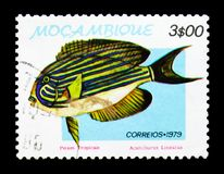 Lined Surgeonfish Acanthurus lineatus,Tropical Fish serie, circa 1979. MOSCOW, RUSSIA - JANUARY 2, 2018: A stamp printed in Mozambique shows Lined Surgeonfish Royalty Free Stock Photo