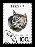 Silver Tabby Felis silvestris catus, Cats serie, circa 1992. MOSCOW, RUSSIA - JANUARY 2, 2018: A stamp printed in Tanzania shows European Silver Tabby Felis Royalty Free Stock Photo