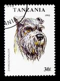 Minature Schnauzer Canis lupus familiaris, Dogs serie, circa 1993. MOSCOW, RUSSIA - JANUARY 2, 2018: A stamp printed in Tanzania shows Minature Schnauzer Canis Stock Images