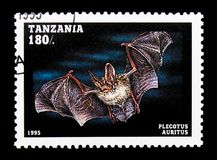 Plecotus auritus, Bats serie, circa 1995. MOSCOW, RUSSIA - JANUARY 2, 2018: A stamp printed in Tanzania shows Plecotus auritus, Bats serie, circa 1995 Stock Photo