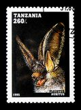 Plecotus auritus, Bats serie, circa 1995. MOSCOW, RUSSIA - JANUARY 2, 2018: A stamp printed in Tanzania shows Plecotus auritus, Bats serie, circa 1995 Royalty Free Stock Image