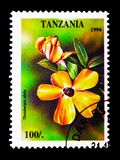 Thunbergia alata, Tropical Flowers serie, circa 1994. MOSCOW, RUSSIA - JANUARY 2, 2018: A stamp printed in Tanzania shows Thunbergia alata, Tropical Flowers Stock Photos