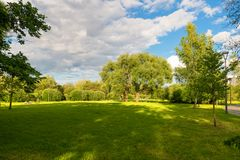 A large oak tree on a glade. MOSCOW, RUSSIA - 23 JULY, 2017: A large oak tree on a glade in a walking area on a warm summer evening in a recreation area in Royalty Free Stock Photos
