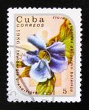 Thunbergia grandiflora Flower, the series `Exotic Flowers from botanical garden`, circa 1986. MOSCOW, RUSSIA - JULY 15, 2017: A post stamp printed in Cuba shows Stock Image