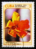Cassia Ligustrina flower, serie Wild flowers, circa 1974. MOSCOW, RUSSIA - JULY 15, 2017: A stamp printed in Cuba shows Cassia Ligustrina flower, serie Wild Stock Images