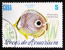 Fish with the inscription `Chaetodon capistratus`, the series `Aquarium fishes`, circa 1985 Stock Images