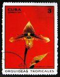 Flower Cypripedium callosum, or Paphiopedilum callosum, Tropical orchids, circa 1971. MOSCOW, RUSSIA - JULY 15, 2017: A stamp printed in Cuba shows a flower Stock Photos