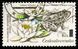 """MOSCOW, RUSSIA - JULY 15, 2017: A stamp printed in Cuba shows Wa. Ter lilies and frog with the inscription Nymphaea candida, Rana esculenta from the series """" Royalty Free Stock Photo"""