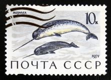 Narwhal Monodon monoceros, Marine Mammals serie, circa 1971. MOSCOW, RUSSIA - JULY 15, 2017: A stamp printed in USSR Russia shows Narwhal Monodon monoceros Stock Image