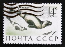 MOSCOW, RUSSIA - JULY 15, 2017: A stamp printed in USSR (Russia) shows Ribbon Seal (Phoca fasciata), Marine Mammals serie, circa. 1971 royalty free stock photography