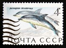 Short-beaked Common Dolphin Delphinus delphis, Marine Mammals serie, circa 1971. MOSCOW, RUSSIA - JULY 15, 2017: A stamp printed in USSR Russia shows Short Stock Images