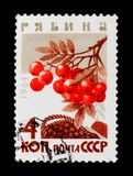 European Rowan, Sorbus aucuparia, from the series `Berries`, circa 1964. MOSCOW, RUSSIA - JUNE 26, 2017: A stamp printed in USSR Russia shows a European Rowan Royalty Free Stock Photo
