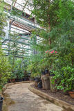 Moscow, Russia - March 5, 2017: Interior of Moscow botanical tropic greenhouse Stock Image