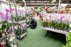 MOSCOW, RUSSIA - MARCH 04 2015: Orchids in OBI store in Moscow Russia. OBI is a German retail chain stores and building 570 stores. MOSCOW, RUSSIA - MARCH 04 stock images