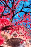 Ornamental Sakura trees near the fountain in GUM in Red Square. Spring. royalty free stock photos