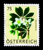 Christmas Rose Helleborus niger, Alpine Flowers serie, circa 2007. MOSCOW, RUSSIA - MARCH 18, 2018: A stamp printed in Austria shows Christmas Rose Helleborus stock photo