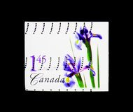 Purple Dutch Iris, Flower Definitives (1st series) serie, circa. MOSCOW, RUSSIA - MARCH 18, 2018: A stamp printed in Canada shows Purple Dutch Iris royalty free stock images