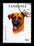 Labrador Retriever (Canis lupus familiaris), Dogs serie, circa 1. MOSCOW, RUSSIA - MARCH 18, 2018: A stamp printed in Tanzania shows Labrador Retriever stock photo