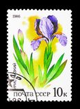 Iris, Plants of Russian Steppes serie, circa 1986. MOSCOW, RUSSIA - MARCH 31, 2018: A stamp printed in USSR (Russia) shows Iris, Plants of Russian stock illustration