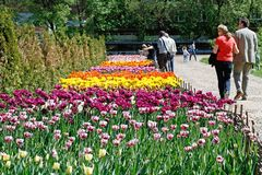 People walk along the path next to the field of tulips in botanical garden `Aptekarsky garden` in Moscow. Moscow, Russia - May 07, 2018: People walk along the royalty free stock photos